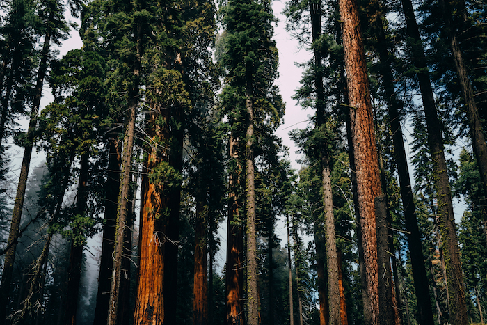 Time and Place: Redwoods